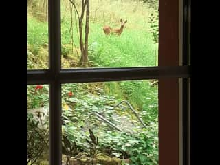 Frequent visitor to our garden