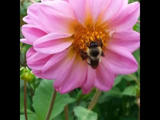 Just one of my photos, I love bees.
