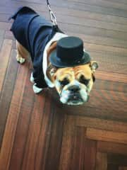 Another dear friend, Fergie, the VERY BEST man at his owner's wedding!