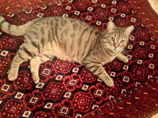 The cat sat on the mat!