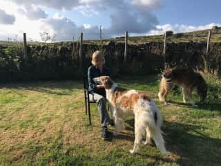 Summer in England, with the beautiful Barzoi's Bella and Briar