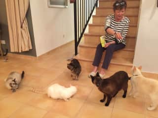 Our house sit in La Linea, Spain, with 8 rescue cats - Feb 2020