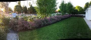 Front garden to street view