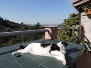 Kitty lounging on the terrace