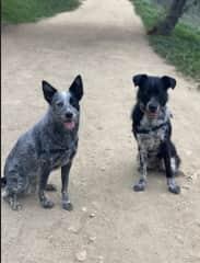 Daphni and Oskar
