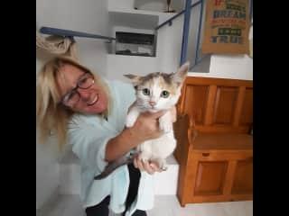 Pueblo street cat Dinky