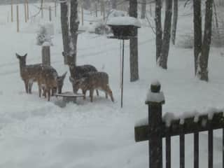 Wild friends at the back feeder