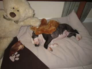 a little puppy i looked after ... i did made his bed :)