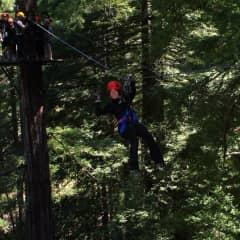 Ziplining in the Redwoods.