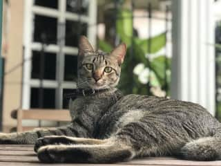 Parker:From Malaysian street kitten to international playboy.