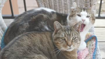 Feather and Chip relaxing on the porch