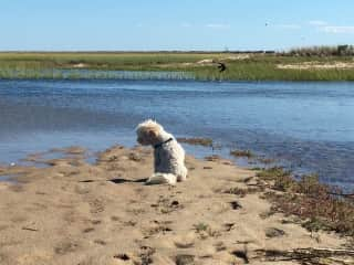 I have spent many summers on Cape Cod. This is Luna on one of our walks.