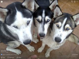 """My favorite picture of """"The 3 little boys"""" - Jamie, Julian, Jasper (left to right)"""
