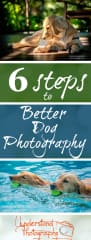 I have an online photography training business at UnderstandPhotography.com