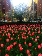 Park Avenue in the spring