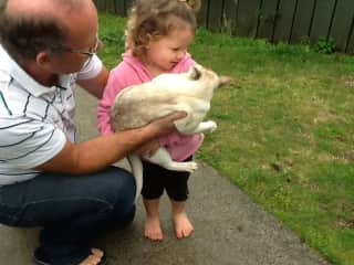 Clive introducing the neighbours cat to our grand daughter