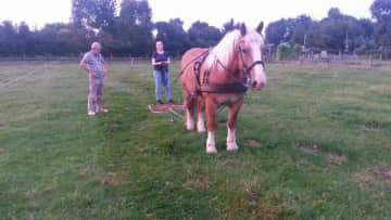 Me and my draugt horse Willem