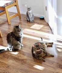 Remy, Beany and Lulu waiting for supper