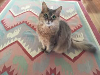 Holly the Cat on her Mat