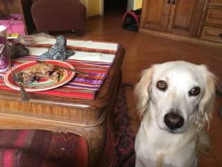Bella wants my food