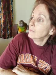 Mookie the Senegal Parrot