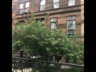 Three story brownstone on a lovely block!