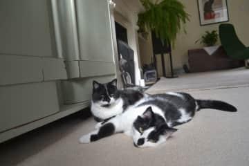Dottie and Bella