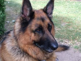 Mr Baz, the gentle giant and regular pal from Canberra