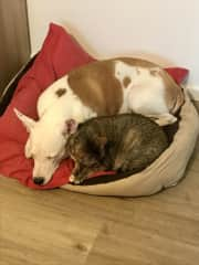 Florinda is very sweet and loves to cuddle with her sisters.