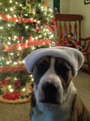 Dander, our boxer- pit mix, who passed but is missed very much!
