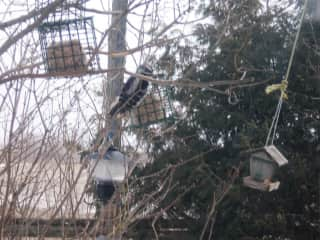 Birds feeding at the farm in Winter