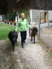 Taking the horses out - Kappelen, Switzerland