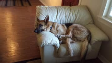 """Hans in """"his"""" chair"""