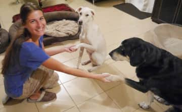Petra with Kobi and Boau in Dubai - Dog and house sitting in December 2015/ January 2016