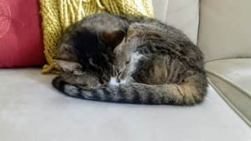 18 year old Cat Croissant 2019