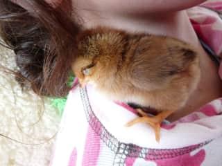 little chicken, Rosida, loves to hug