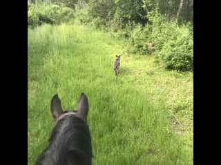 Trail riding with Spyder and Hazel