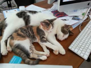 Monty and Maisy help with computing