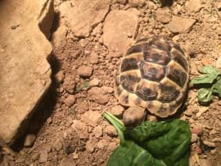 So fun caring for a sweet tortoise in Cornwall,U.K.!