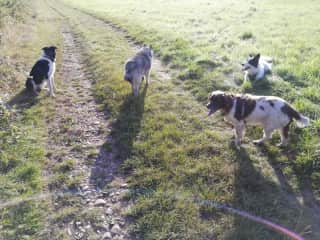 Walking the boys and dexter on our sit in Rous Lench
