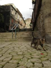 Alina & Gato in Portugal