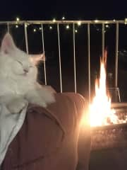toto by the fire