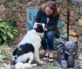 A beautiful border collie sit in Charlottesville