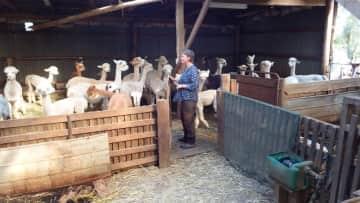 Hildegunn with the alpacas
