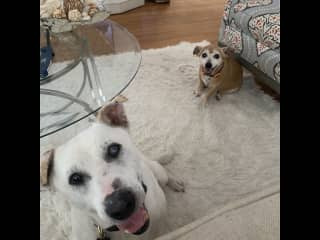 Two dogs I recently sat for. :)