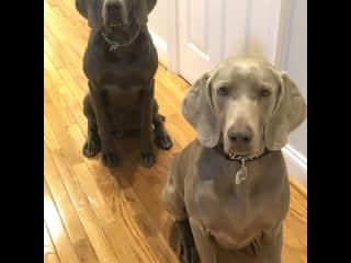 Bentley (blue) Willi (grey)