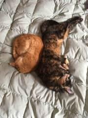 My two beloved kitties - Sam and Elsie