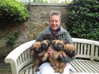 6 Wk old Wheaten Terriers