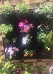 My attempt at a wall garden