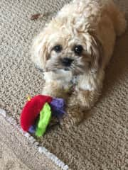 Bella - loves to play